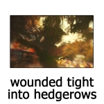 2010-03-wounded-tight-into-hedgerows